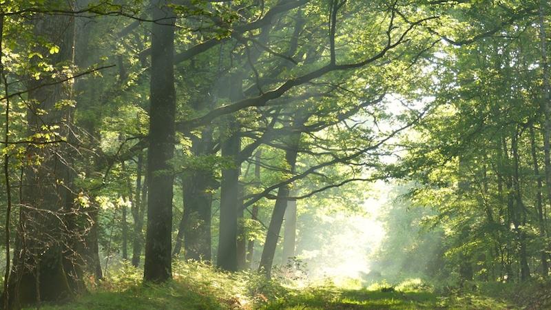 Où se balader en forêt près de Paris ?